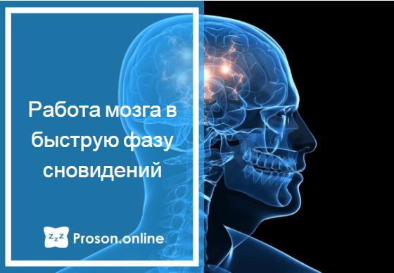 какая часть мозга отвечает за сон