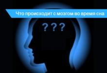 во время сна деятельность мозга
