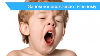 почему человек часто зевает